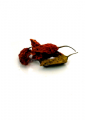 Dried Whole Naga Jolokia Chillies (Bhut Jolokia)